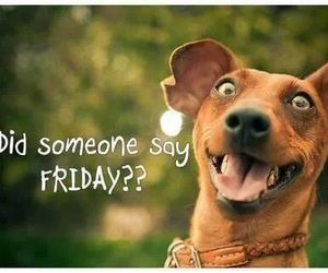 friday, dog, and funny image