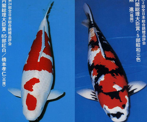 archive, fish, and japan image