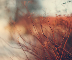 photography, autumn, and nature image