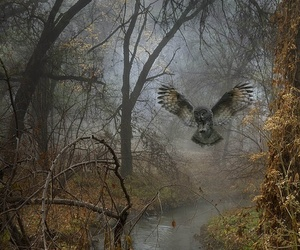 nature, owl, and tree image