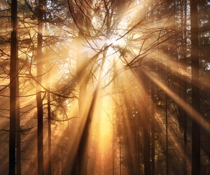 forest, sun, and light image