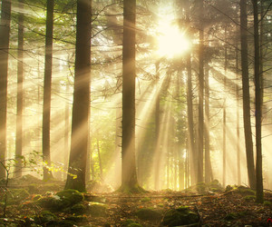 forest, sun, and trees image