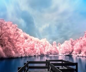 lake, nature, and pink image