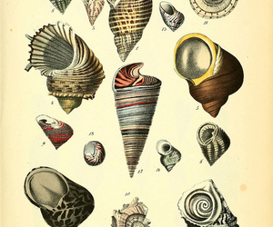 conch, illustration, and diagram image
