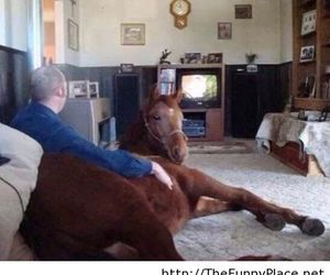 horse, funny, and animal image