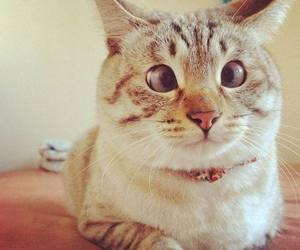 cat, funny, and animal image