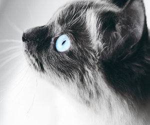 adorable, black and white, and blue image