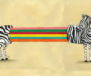 zebra and rainbow image