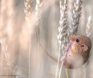 mouse, animal, and nature image
