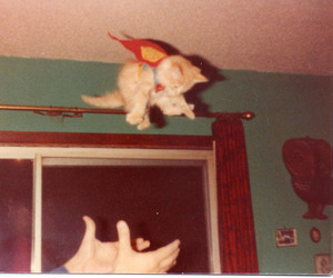 Flying, kitten, and vintage image