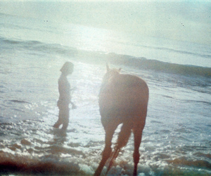 horse, ocean, and sea image