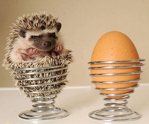 egg, hedgehog, and cute image