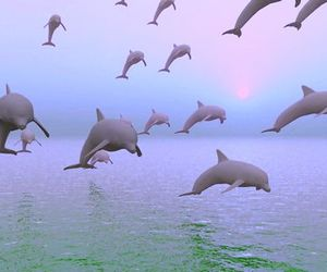 dolphin, grunge, and sea image