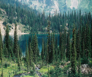 nature, mountains, and trees image