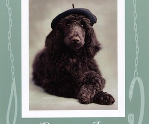 black, dog, and french poodle image