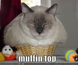 cat, funny, and muffin image