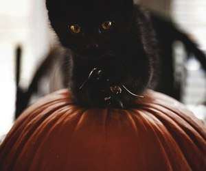 funny, Halloween, and cute image