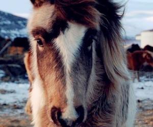 horseriding, horses, and pony image