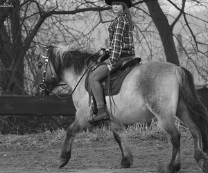 black and white, horse, and konie image