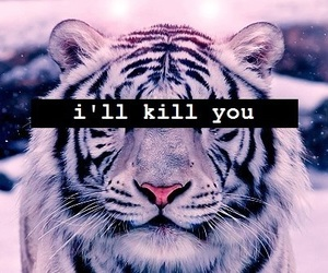 tiger, kill, and animal image