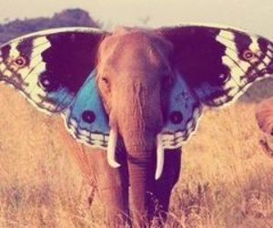 beautiful, butterfly, and ears image