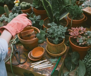 girl, plants, and succulents image