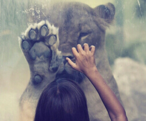 grunge, lion, and friends image