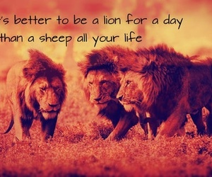 lion and quote image