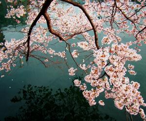 flowers, tree, and beautiful image