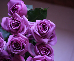 flowers, rose, and purple image