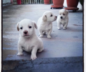 dog, funny, and puppies image