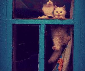 animals, cat, and Dream image