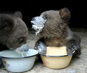 bear, animal, and baby image