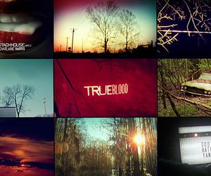 true blood, trueblood, and vampire image
