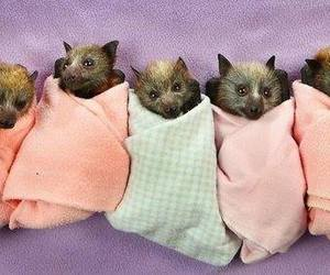 baby bats and cuteness overload image
