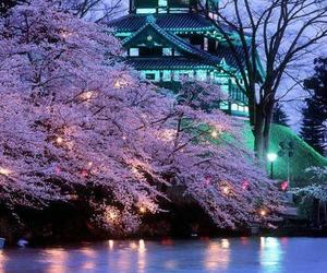 japan, sakura, and asia image