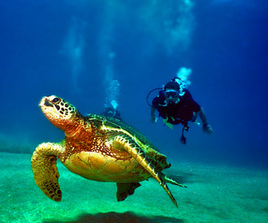 animal, awesome, and ocean image
