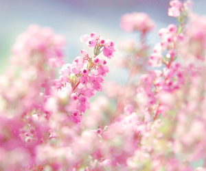 pink, flowers, and october image