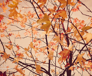 5d, autumn, and mk image