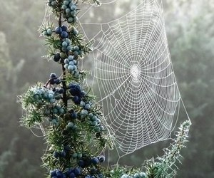 nature, web, and spider image
