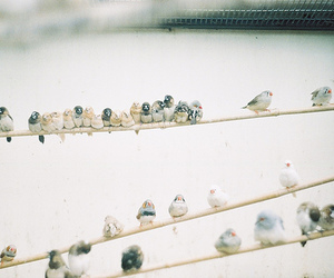 bird, photography, and vintage image