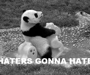 panda, haters, and hate image
