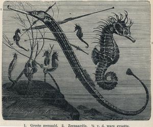 eel, ocean, and underwater image