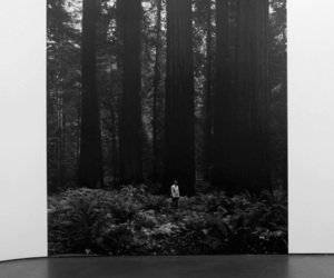 art, photography, and tree image