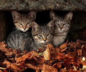 autumn and kittens image