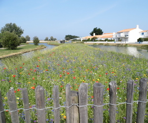 flowers, noirmoutier, and river image