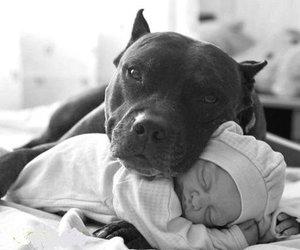 dog, baby, and pitbull image