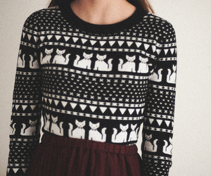 cat, fashion, and sweater image