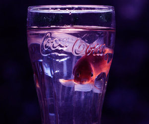 fish, coca cola, and water image