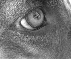 b&w, dog, and doggy image
